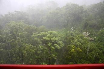 Back window view