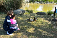 Visiting the ducks.
