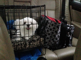 """Emi in her """"carseat"""" headed home."""