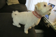 The red collar came from the groomer.